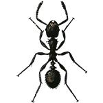 Schädlingsbekämpfung & Insektenschutz gegen Ameisen: neocid.swiss