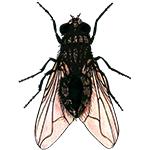 Schädlingsbekämpfung & Insektenschutz gegen Fliegen: neocid.swiss