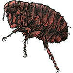 Schädlingsbekämpfung & Insektenschutz gegen Flöhe: neocid.swiss