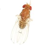 Schädlingsbekämpfung & Insektenschutz gegen Fruchtfliege: neocid.swiss