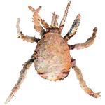 Schädlingsbekämpfung & Insektenschutz gegen Hausstaubmilbe: neocid.swiss