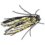 Schädlingsbekämpfung & Insektenschutz gegen Motten: neocid.swiss