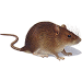 Produkte zur Schädlingsbekämpfung: Mäuse | neocid.swiss