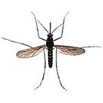 Schädlingsbekämpfung & Insektenschutz gegen Mücken: neocid.swiss