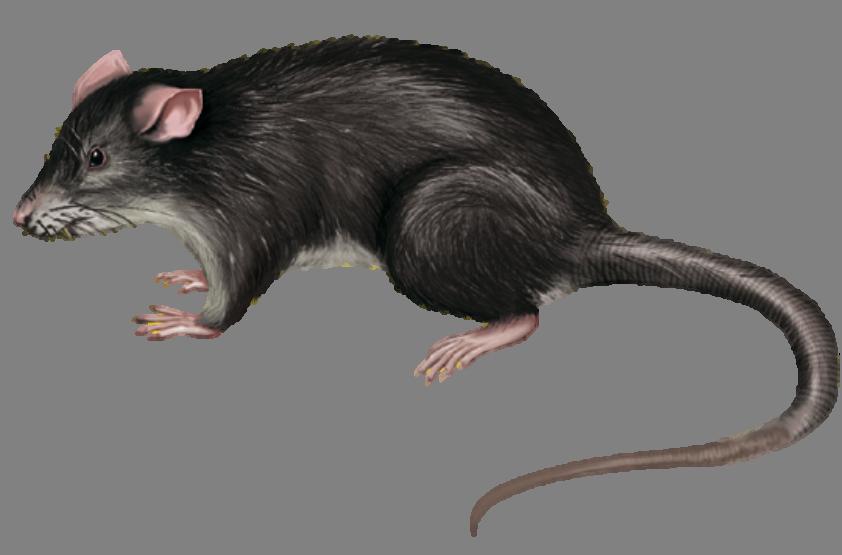 Mäuse & Ratten