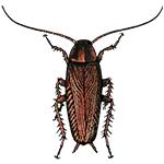 Schädlingsbekämpfung & Insektenschutz gegen Schabe: neocid.swiss