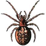 Schädlingsbekämpfung & Insektenschutz gegen Spinnen: neocid.swiss