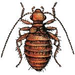 Schädlingsbekämpfung & Insektenschutz gegen Staublaus: neocid.swiss