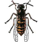 Schädlingsbekämpfung & Insektenschutz gegen Wespen: neocid.swiss